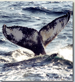 Whale and Dolphin Watching in New York